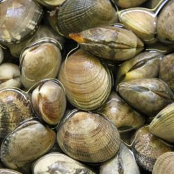 About Vongole (Clams)