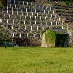 Wine Pairings for Calamarata con Gamberi e Asparagi (Shrimp and Asparagus)
