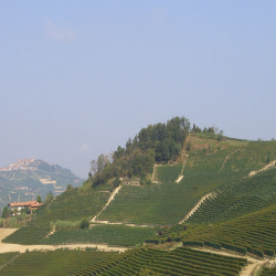 Wine Pairings for Fettuccine ai Funghi e Pomodoro (Mushrooms)