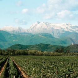 Wine Pairings for Pennone con Cavolfiore al Forno (Cauliflower)