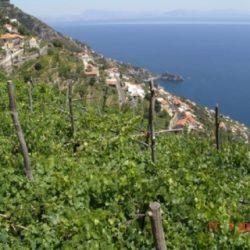 Wine Pairings for Spaghetti alla Puttanesca